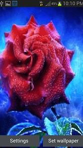 Foggy Red Rose LWP