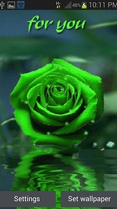 Green Rose For You LWP