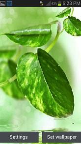 Green Leaf Shine Lwp