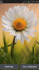 Sunsine Flower LWP