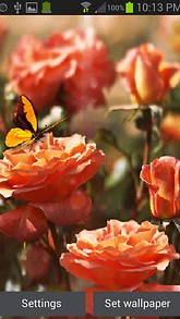 Orange Butterfly Rose LWP