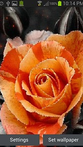 Orange Rose Shine LWP