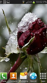 Frozen Red Rose LWP