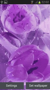 Purple Flower Blooming LWP