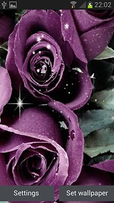Purple Roses Shine LWP